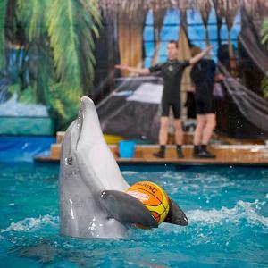 Дельфинарии, океанариумы Белой