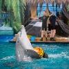 Дельфинарии, океанариумы в Белой