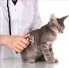 Ветеринарные клиники в Белой